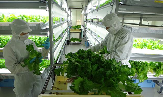 阪神野菜栽培所